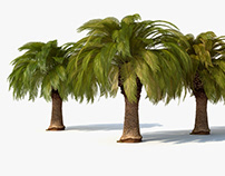 MM_PALM_TREE_01