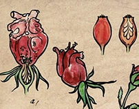 BOTANICAL Pictures of Flora of the Human HEART
