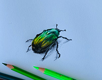 The beetle on my balcony (this morning)