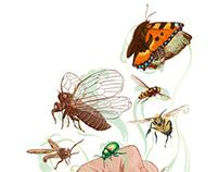 Endangered Inverebrates