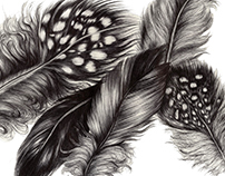 Feather Illustrations (Part one)