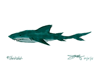 DIGITAL DOODLES: Shark Week 2015