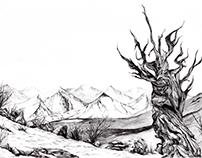 """Methuselah – 2014 (""""8.5 x 11)"""