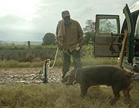 Largometraje Mr. Pig - 2016