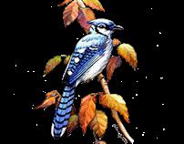 Birds of Four Seasons