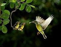 80 Best Award Winning Wildlife Photography examples