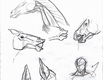 Horse Head/Neck Studies