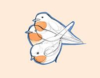 Pettirosso / Robin