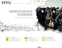 Web dewelopment. Corporate site