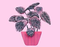 Plants VS Planters