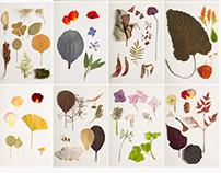 Herbarium project
