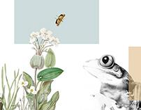 Fauna Herbarium