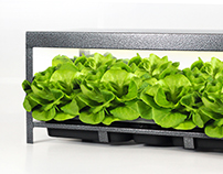 Plant Cartridge