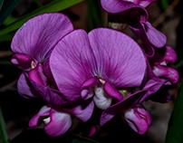 Purple and purple...