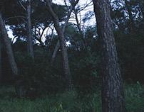 Presqu'île de Giens