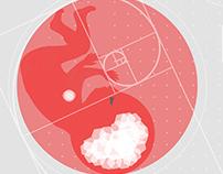 TEDxCauGiay - Embryo