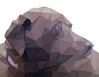 Geographic Dog - Photoshop