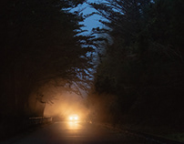 Driving into the woods