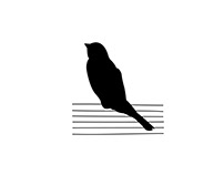 Bird on a Wire flute & guitar duo logo and word mark.