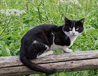 il gattino di Menas