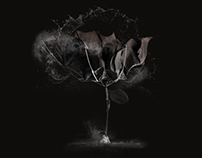 Grey Flowers - digital collage