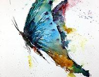 Watercolor - Butterfly