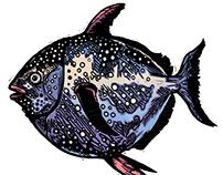 Three Delicious Fish