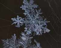 Snow up close