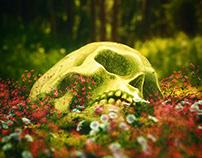 † 3D Skull Model Pack †