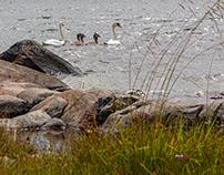 Gräsö, Sweden