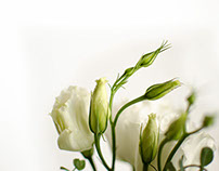 Floral Photography Editing & Design