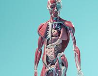Anatomischer Spiegel