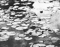 Photographies à la gomme bichromatée