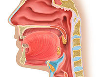 Anatomic and medical illustrations