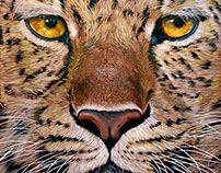 Jaguar - 2016