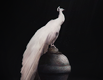 White peacock (digital painting)