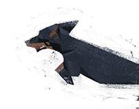 - dachshund -