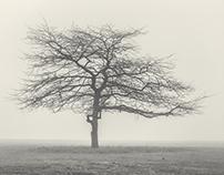 Misty Park Morning