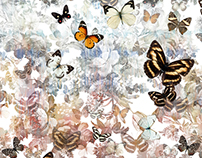 Butterfly Garden - SS15