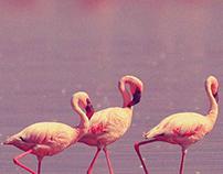 Flamingo confeitaria.