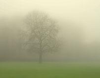 Winter stillness