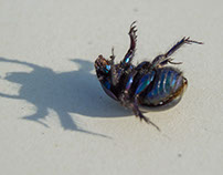 Beetle    besouro