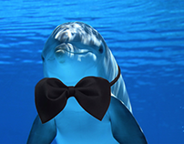 dolphin...