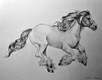 Pony Horse Pencil Drawing