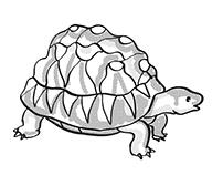 Radiated Tortoise Endangered Wildlife Cartoon Mono Line