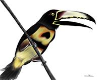 Diversity of birds