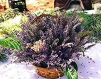 Lavender Festival in Redlands, CA