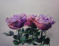 Январские розы.