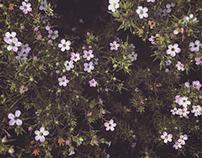 Flowers Pt. III