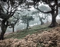 MADEIRA Posto Florestal do Fanal